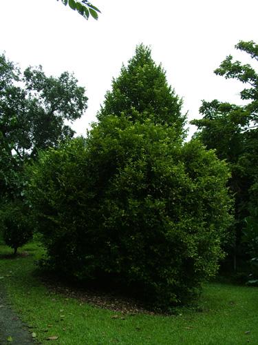 أشجار نعرف ثمارها نعرفها