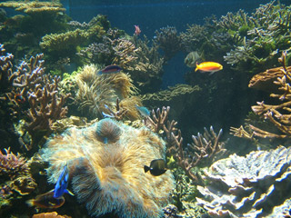 Exotic Tropical Fish & their Living Corals